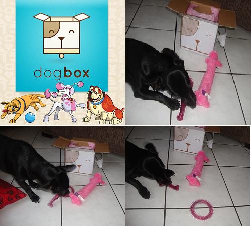 dogbox preto