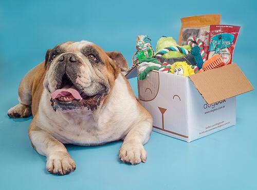 dogbox principal