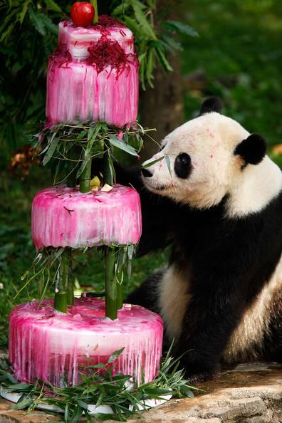 Smithsonian+National+Zoo+Celebrates+4th+Birthday+NtciPpstIf5l_large