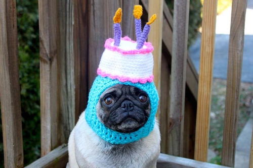 chapéu pug